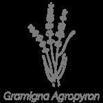 Illustrazione Gramigna Agropyron | Déco bio