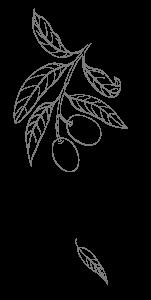 Illustrazione foglie | Déco bio