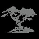 Albero | Déco bio
